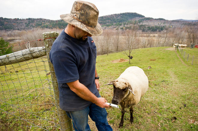 Vermont Farmer with Sheep and iPhone